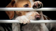 Dog food without animal experiments