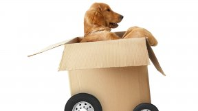 Hund transportieren