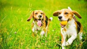 Hundetagesstätte Lauras Pfotenhaus