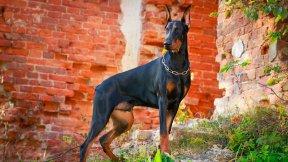 Meldepflicht für Hunde